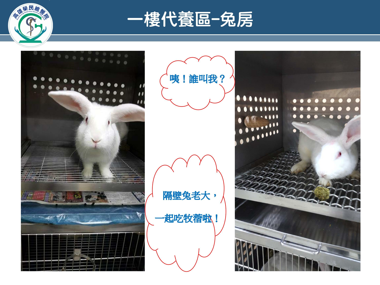 一樓代養區-兔房(圖片)
